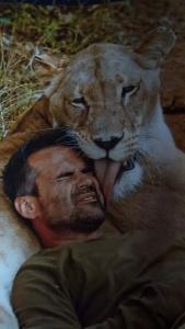 Nel Kevin Richardson Wildlife Sanctuary la leonessa Livy dimostra il suo affetto a Kevin che l'ha cresciuta